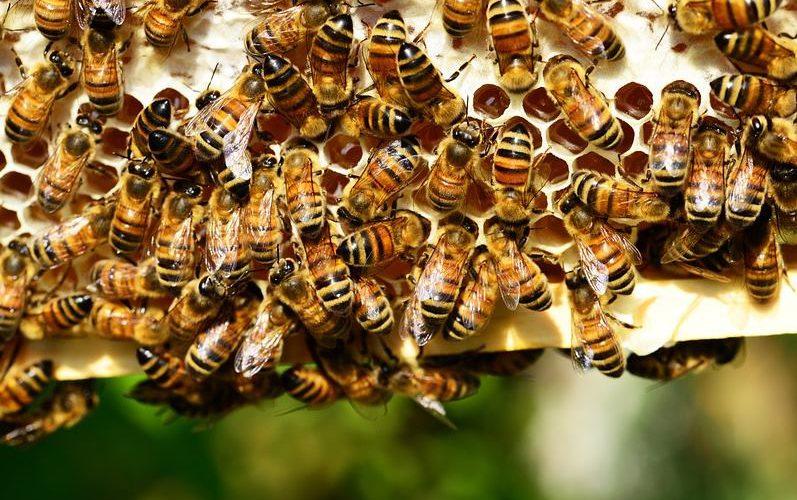 plaster pszczoły