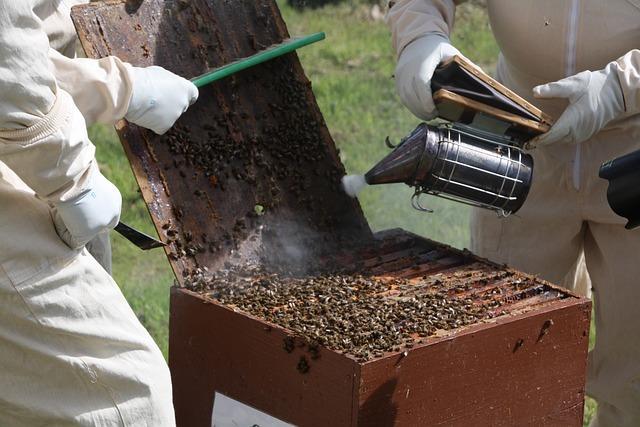 Pszczelarstwo - Sprzęt pszczelarski